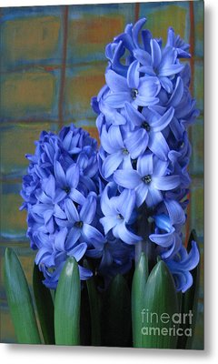 Metal Print featuring the photograph Hyacinths by Patricia Januszkiewicz