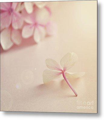 Hydrangea Flower Metal Print