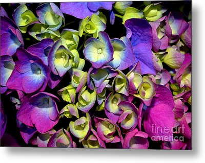 Metal Print featuring the photograph Hydrangea by Vivian Krug Cotton