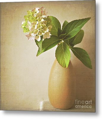 Hydrangea With Leaves Metal Print by Lyn Randle