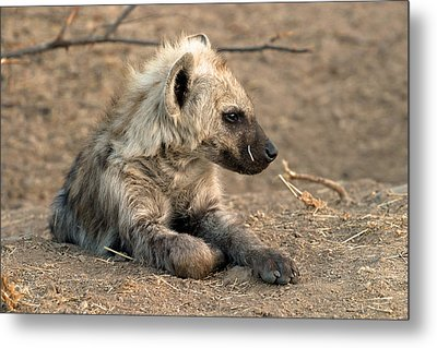 Metal Print featuring the photograph Hyena by Riana Van Staden