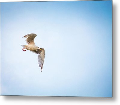 Metal Print featuring the photograph I Believe I Can Fly by Joel Witmeyer