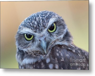 Metal Print featuring the photograph I Give A Hoot by Chris Scroggins