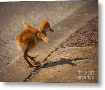 I Have A Wings Metal Print by Zina Stromberg