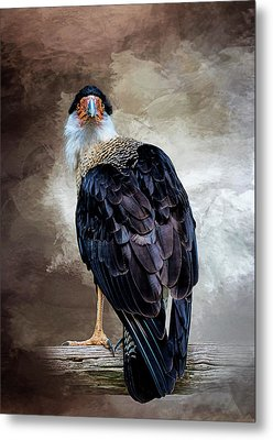 I Have Got  My Eye On You Metal Print by Cyndy Doty