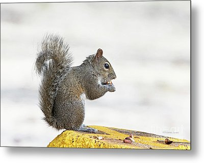 Metal Print featuring the photograph I Have My Nuts by Deborah Benoit