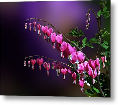 I Love Bleeding Hearts Metal Print by Judy  Johnson