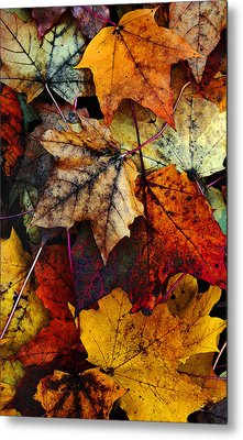 I Love Fall 2 Metal Print by Joanne Coyle
