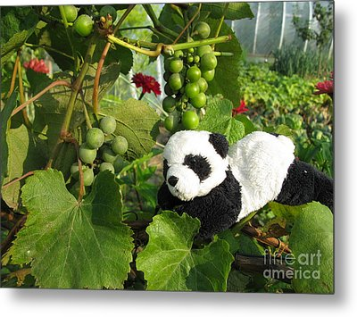 Metal Print featuring the photograph I Love Grapes Says The Panda by Ausra Huntington nee Paulauskaite