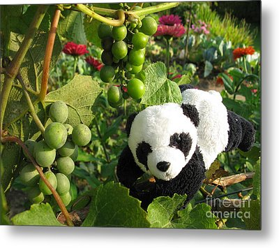Metal Print featuring the photograph I Love Grapes B by Ausra Huntington nee Paulauskaite