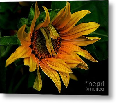 Metal Print featuring the photograph I Need A Comb by Elfriede Fulda