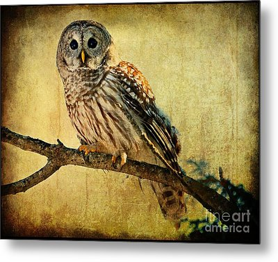 Solitude Stands While Wisdom Draws Near Metal Print by Heather King