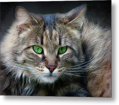 I Only Have Eyes For You Cat Art Metal Print by Georgiana Romanovna