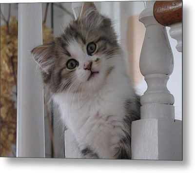 I See You Metal Print by Johanne Hammond