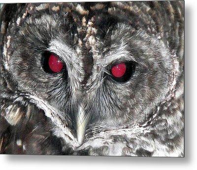 I See You Metal Print by Karen Wiles