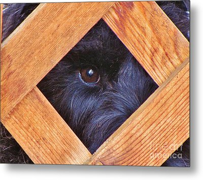 Look Closely  Metal Print by Michele Penner