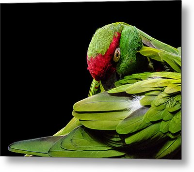 I See You Metal Print by Rob Amend