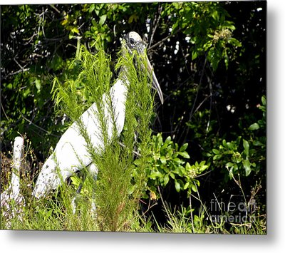 Metal Print featuring the photograph I See You by Terri Mills