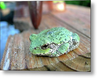 I Toad You So Metal Print by Randy Rosenberger