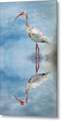 Ibis Metal Print by Cyndy Doty