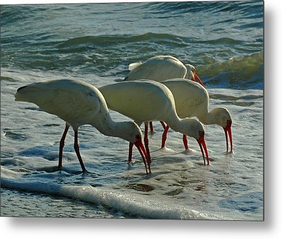 Ibises At Bowman Metal Print by Juergen Roth