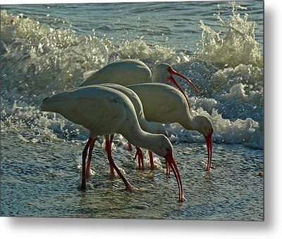 Ibises Metal Print by Juergen Roth