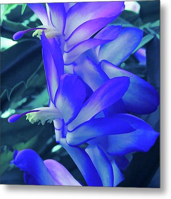 Metal Print featuring the photograph Ice Cold Christmas Cactus Flower by Aimee L Maher Photography and Art Visit ALMGallerydotcom