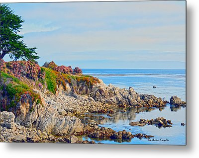 Ice Plant Along The Monterey Shore 3 Metal Print by Barbara Snyder