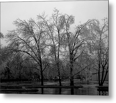 Ice Trees Metal Print by Audrey Venute