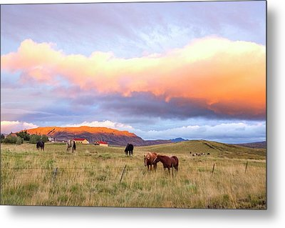 Metal Print featuring the photograph Icelandic Horses Under The Sunset by Brad Scott