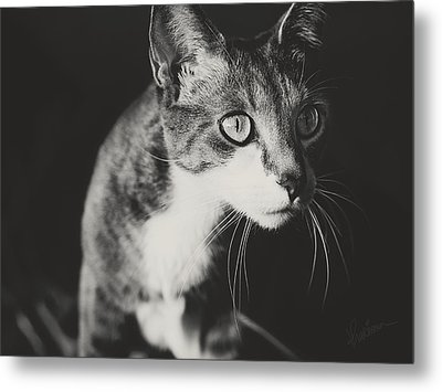 Ickis The Cat Metal Print