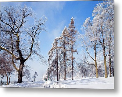 Icy Frosting Metal Print by Timothy McIntyre
