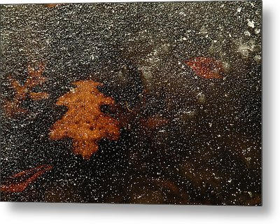 Icy Leaf Metal Print by Michael McGowan