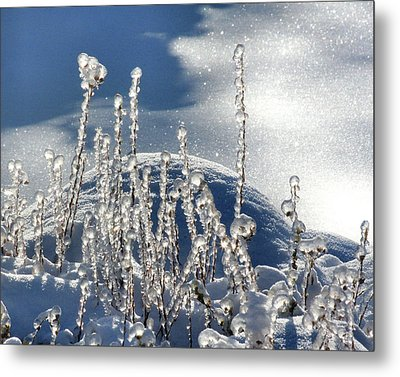 Metal Print featuring the photograph Icy World by Doris Potter