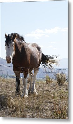 Idaho Work Horse 2 Metal Print by Cynthia Powell