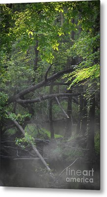 Metal Print featuring the photograph If A Tree Falls In The Woods by Skip Willits