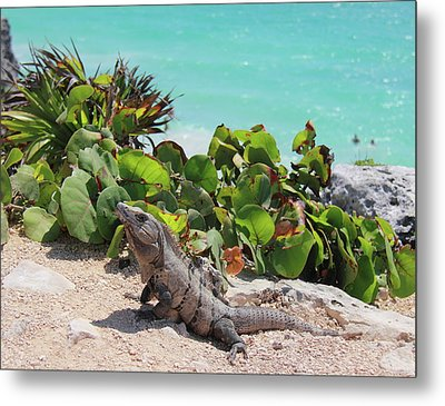 Metal Print featuring the photograph Iguana At Tulum by Roupen  Baker