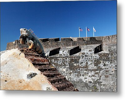 Iguana Basking On The Wall Of The San Cristobal Fort San Juan Puerto Rico. Metal Print by George Oze