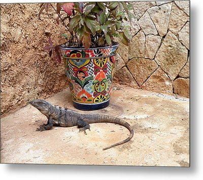 Iguana Metal Print by Dianne Levy