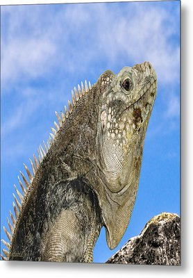 Iguana Nature Wear Metal Print