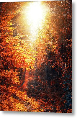 Illuminated Forest Metal Print by Wim Lanclus