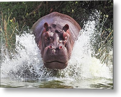 I'm Going To Get You !! Metal Print