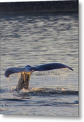 Image 1288049775 Metal Print by Don Wolf