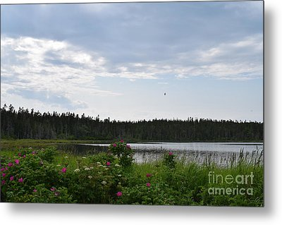 Images From Maine 2 Metal Print