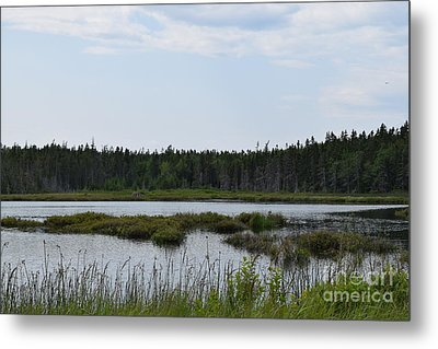 Images From Mt. Desert Island Maine 1 Metal Print