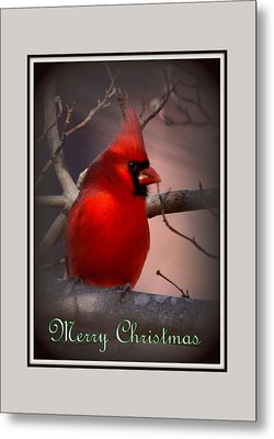 Img_3158-005 - Northern Cardinal Christmas Card Metal Print