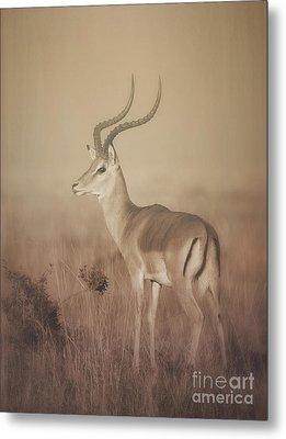 Metal Print featuring the photograph Impala At Dawn by Chris Scroggins
