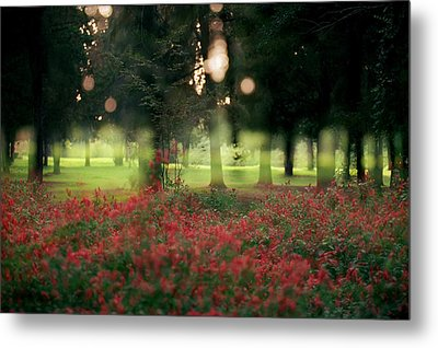 Metal Print featuring the photograph Impression At The Yarkon Park by Dubi Roman