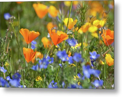 Metal Print featuring the photograph Impressionist Wildflowers by Cliff Wassmann