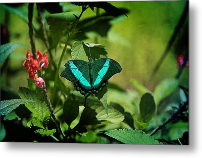 In A Butterfly World Metal Print by Milena Ilieva